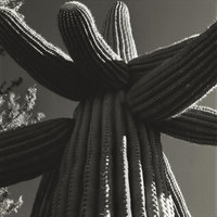 Saguaro Stretch