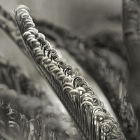 Cycad Leaves #8